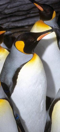 La classification des animaux marins, une incursion dans l'arbre de la vie