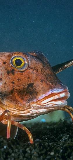 La respiration en milieu marin