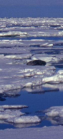 Les mondes arctiques (2nde)