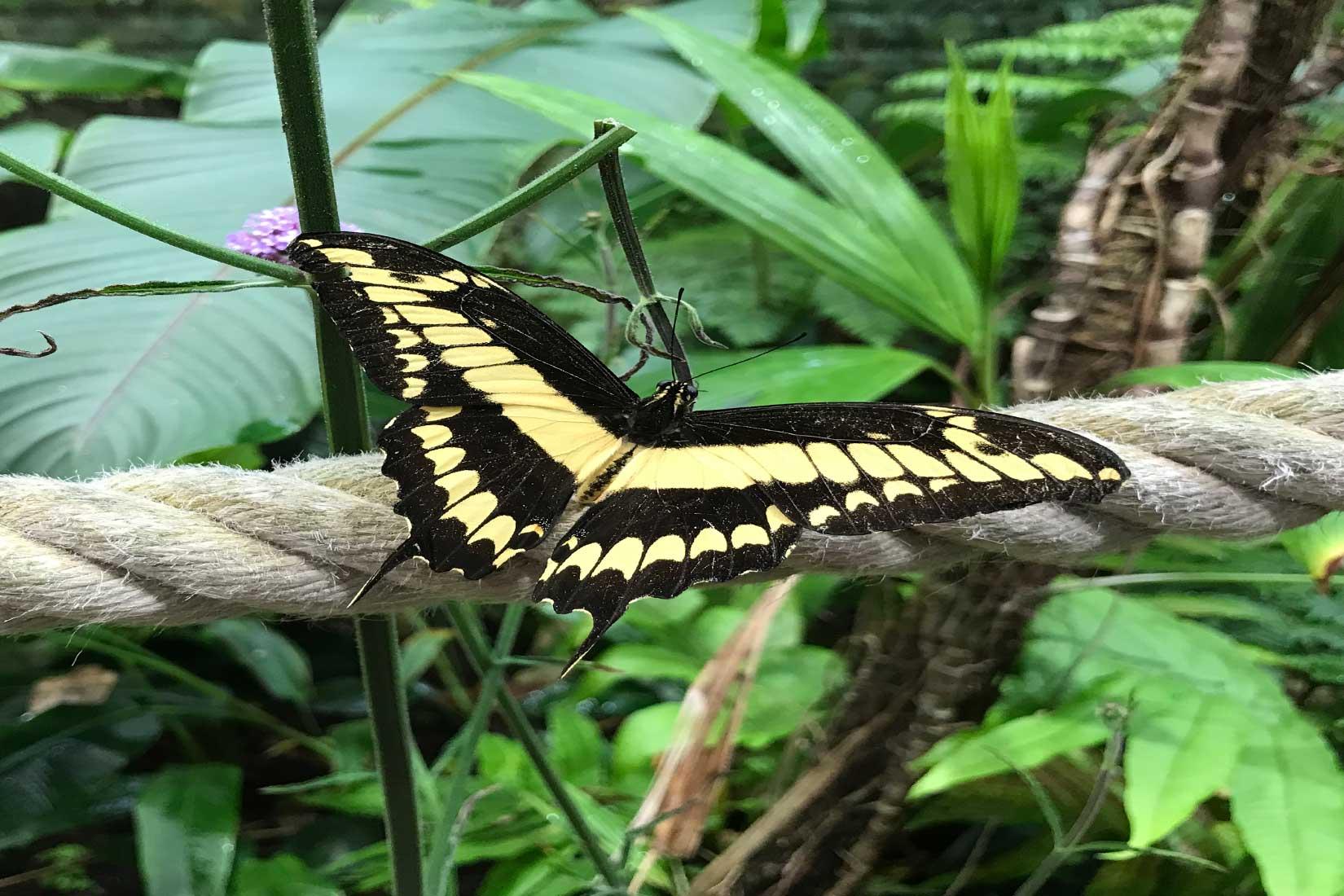 Papillon dans la serre tropicale d'Océanopolis © Océanopolis