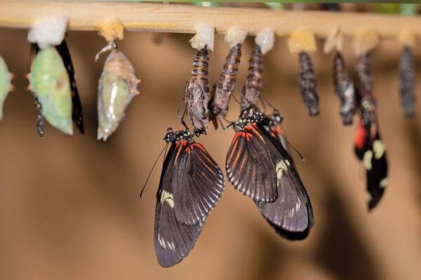 Papillons dans la serre tropicale d'Océanopolis © Océanopolis