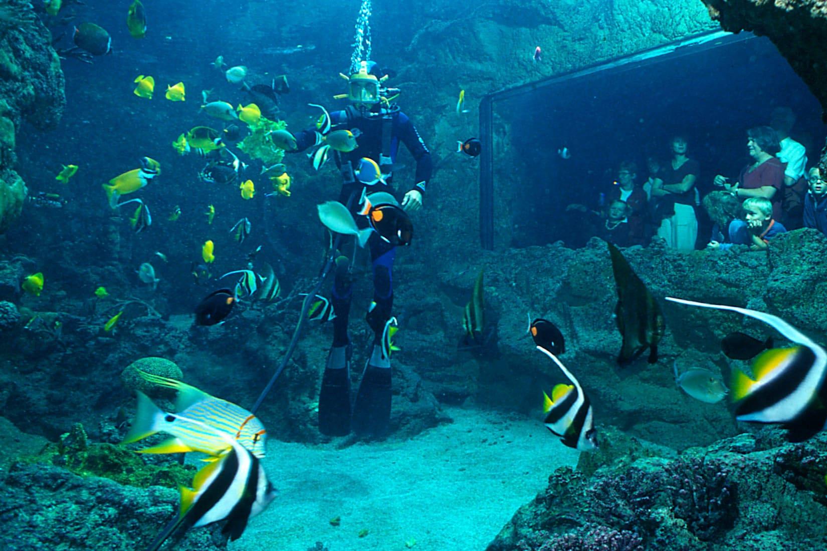 Nourrissage en plongée à Océanopolis Brest © Océanopolis