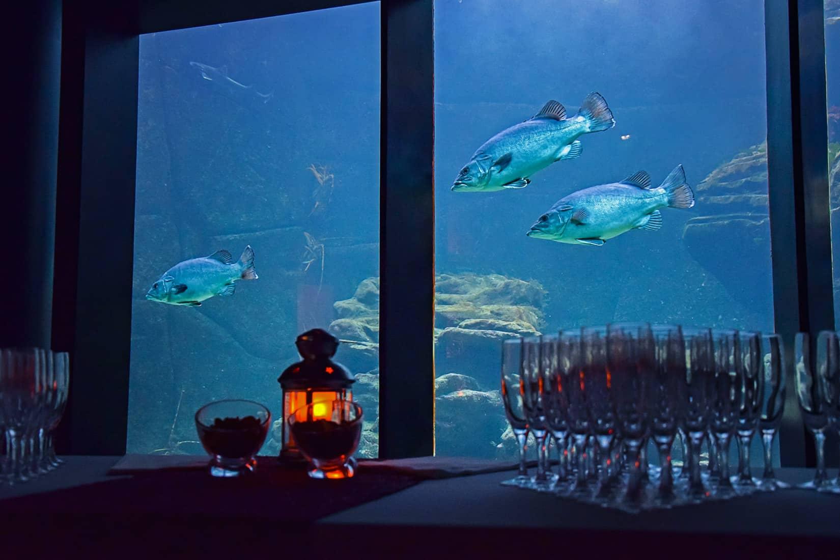 Cocktail devant le bassin Mer d'Iroise - pavillon Bretagne d'Océanopolis © J. Ansquer