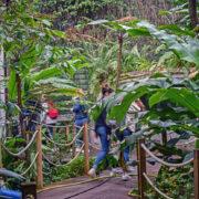 Découvrez le pavillon tropical