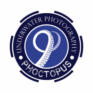 Phoctopus