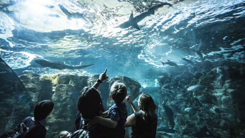 Bassin des requins à Océanopolis - © Simon Cohen