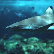 Apprenez-en plus sur les requins