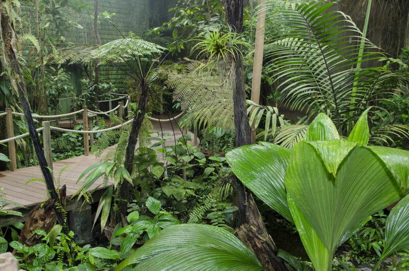 Serre tropicale - © Océanopolis
