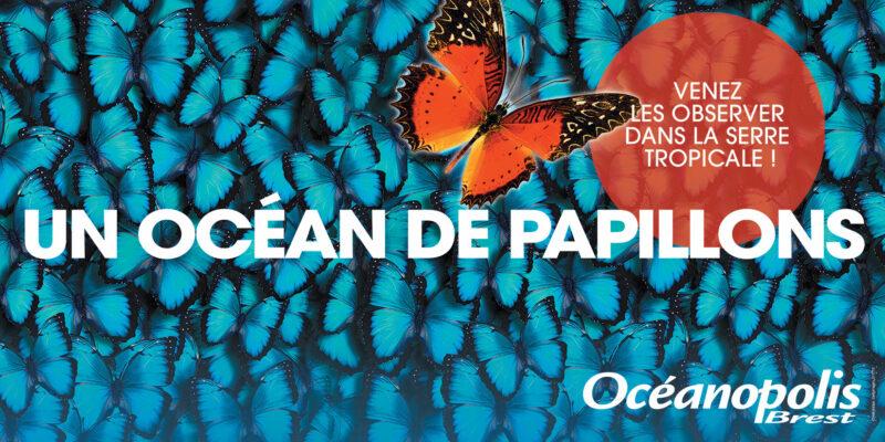 Un océan de papillons 2019 - © Océanopolis
