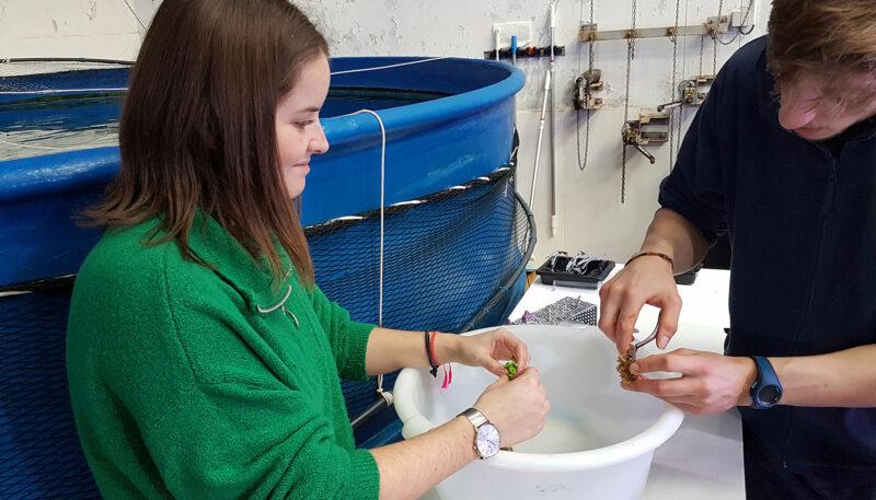 Bouturage de corail pour Manon, 300è soigneur d'un jour - © Océanopolis
