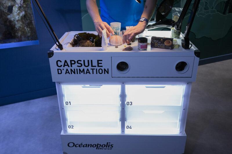 Capsule d'animation - © Océanopolis