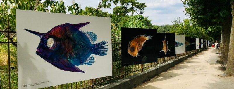 Exposition les petits des poissons - © Muséum national d'Histoire naturelle