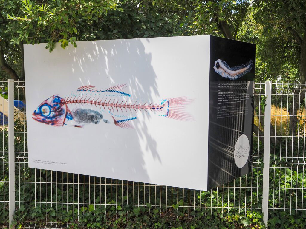 """Exposition """"les petits des poissons"""" - © Océanopolis"""