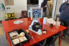 11.09 Objectif plancton au Moulin Blanc